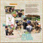 Must Love Llamas!