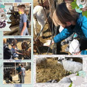 Animals at the Dairy (rhs)