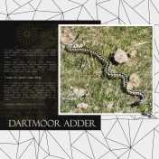 Dartmoor Adder