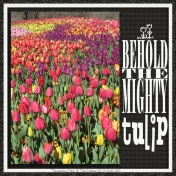 BEHOLD THE MIGHTY tulip- revised (tulip festival 1/5)