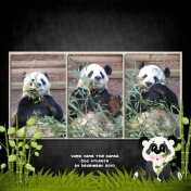 Yang Yang the Panda