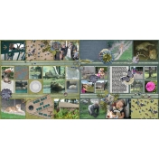 2011-08-10 como zoo1-2 Missmel-AFOLP1 FAB4