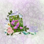 Lilacs in May