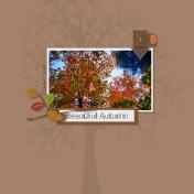 Fall Treetops