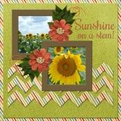 Sunshine on a stem (JCD)