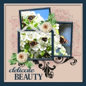 delicate BEAUTY (PBS)