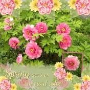 Spring arrives in vivid colors! (jcd)