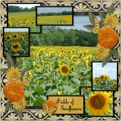 Fields of Sunflowers (pbs)