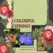 COLORFUL SPRING (sher)