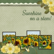 Sunshine on a stem! (Sher)