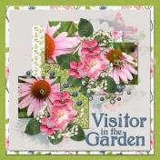 Visitor in the Garden (jcd)