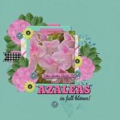Azaleas in full bloom! (ts)