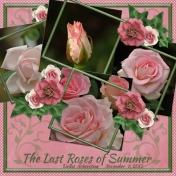 The last roses of summer- Dallas Arboretum 11-9-2013