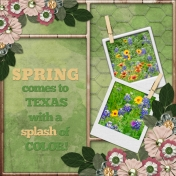 SPRING comes to Texas in a splash of color! (MLerin)