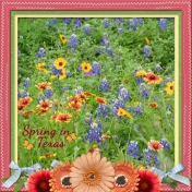 Spring in Texas (otfd)