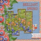 Brilliant Spring! (RMartin)