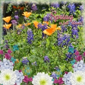 Spring in full bloom! (PBS)