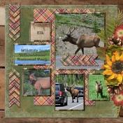Wildlife in Yellowstone National Park - ELK (adb)