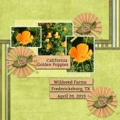 California Golden Poppies (WD)