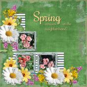 Spring arrives in the neighborhood2 (otfd)