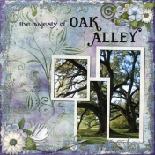 Majesty of Oak Alley