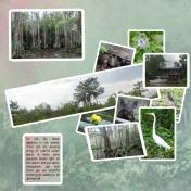 Swamp Sights