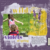 Wild Violets in the Spring