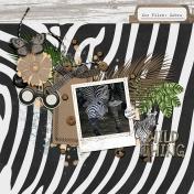 Zoo Files: Zebra