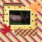 Elk Layout