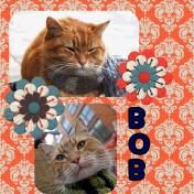 Famous Cats: Bob