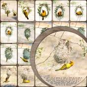 Weavers Nest