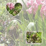Bunny in the Hyacinths w/out Journaling