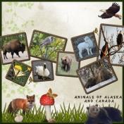 Animals of Alaska and Canada
