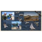 Anacapa Island California