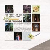 Muir Woods | September 2014