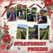 2012 Strawberry Picking
