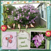 Hibiscus and Clematis