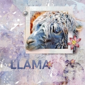 llama Curiosity