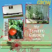 My Tomato Garden