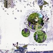 Celebration of spring (Lavender fields)