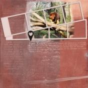 Tree Kangaroos (Travelogue)
