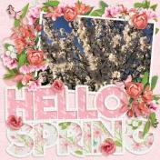 Hello Spring (Sakura)