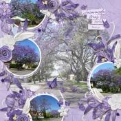 Jacaranda (Purple)