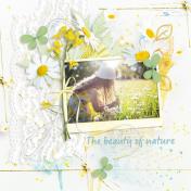 The beauty of nature (Daisy)
