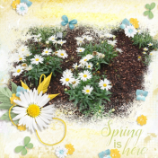Spring is here (Daisy)