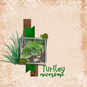 Turtley awesome (Critter cuteness)
