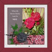 Roses (Pretty Rose)
