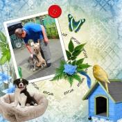 my dog and me 3