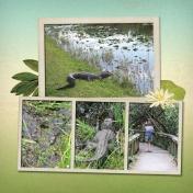 alligators in Everglades National Park