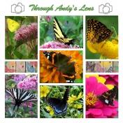Andy's Butterflies